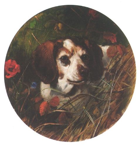"""George Earl: Beagle tiheikössä - A Beagle In A Thicket, 1800 -luku. Englannissa beagleä käytettiin usein spanielin sijasta heinikkoon ja pensaisiin piiloutuvien fasaanien jahdissa. Pienen ja lyhytkarvaisen koiran on helppo liikkua sellaisessa maastossa. Beaglen voi myös spanieleiden tapaan opettaa tuomaan ammuttu riista """"käteen""""."""