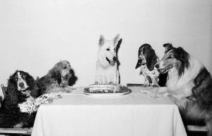 Movie Dog and Friends Celebrating Birthday