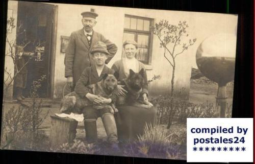 Maatiasrotuisia saksanpaimenpaimenkoiria. Valokuva, noin 1910.