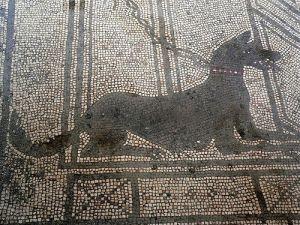 Mosaiikki Pompeijista Italiasta kuvaa vartiotehtävissä olevaa paimenkoiratyyppiä. Pompeijin vauras maaseutukaupunki kukoisti tuhat vuotta sitten ja tuhoutui vuonna 79.