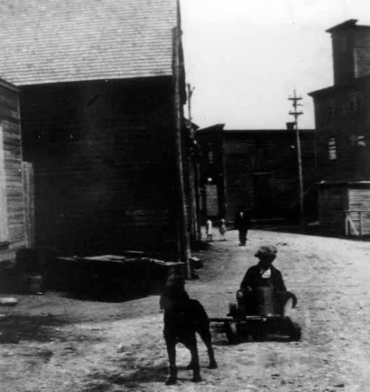 Poika ja koira ajelulla. Water Street, Bonavista, Newfoundland, noin 1900- 1920.