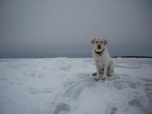Lumimyrsky nouse eteläisellä taivaanrannalla 2.3.2013. Navakkaa ja puuskittaista kaakkoistuulta jopa yli 20 m / s. pakkasta -7C. Uunisaaret, Helsinki.