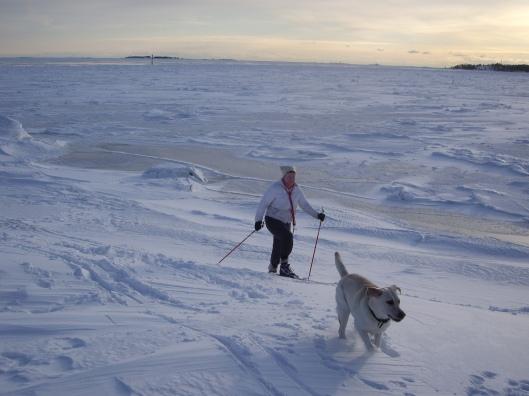 Hiihtelemässä Helsingin eteläisessä lähisaaristossa. Jää kantaa pohjoispuolille saaria ja ahtojää kestää hyvin saarien ympärillä.