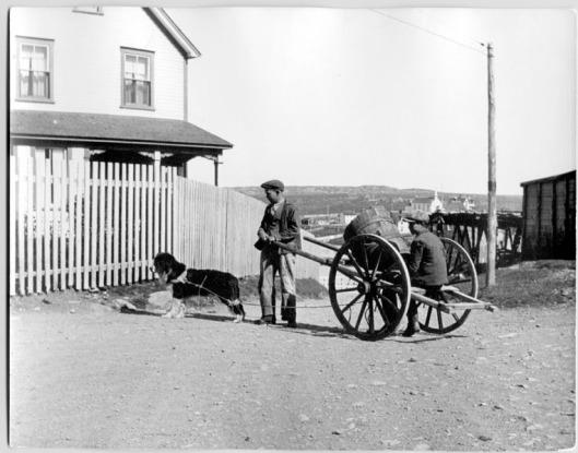 Newfoundland, noin 1910-20 -luku. Lähde: Kanadan kansallisarkistot