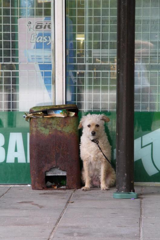 Koira kaupan edessa
